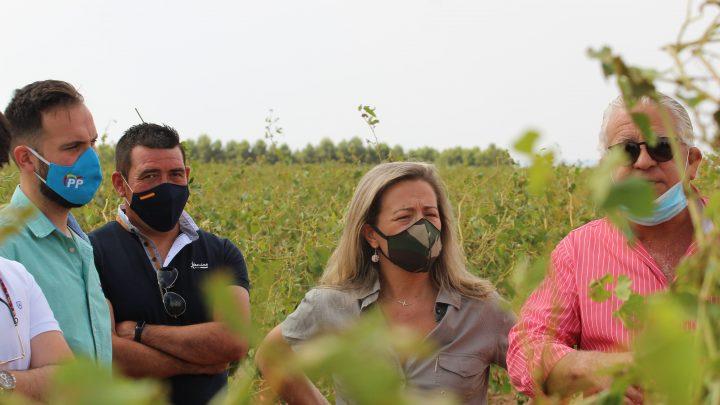 Merino pide a Page que no abandone a su suerte a los agricultores