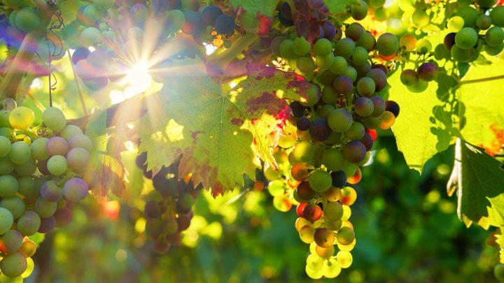 Ahora los viticultores necesitan conocer los costes de producción