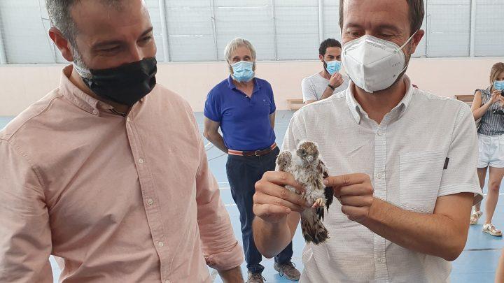 El Gobierno regional declara la Zona Especial de Protección para las aves de cernícalo primilla en dos iglesias en Almodóvar del Campo y en su pedanía Tirteafuera, en Ciudad Real
