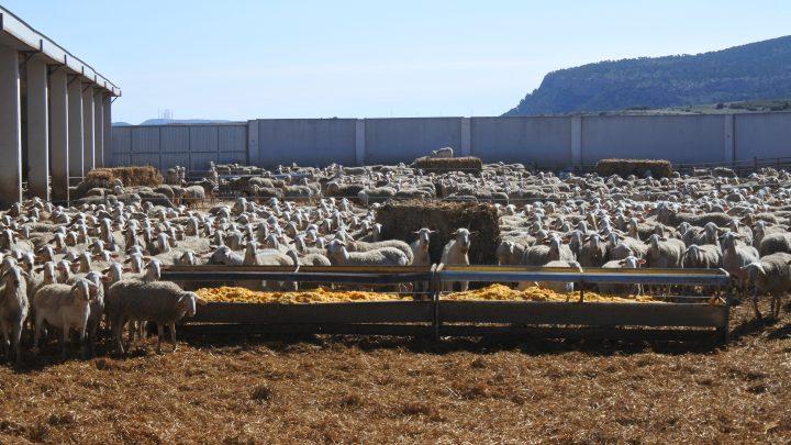 La Asociación de Empresas Forestales de Castilla-La Mancha ha analizado la amenaza de las zonas rurales forestales, afectadas por la despoblación y la falta de empleo