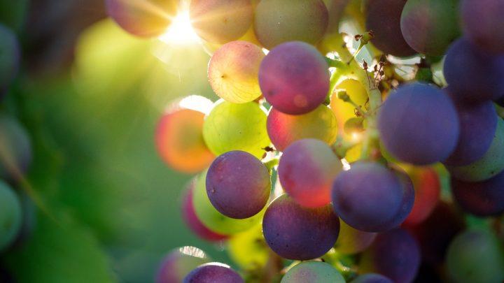Parón total en el mercado del vino