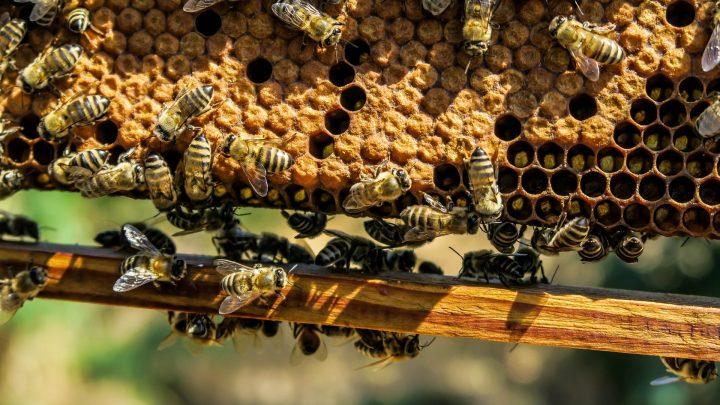 Los apicultores también sufren un mal año que condiciona su viabilidad en 2021