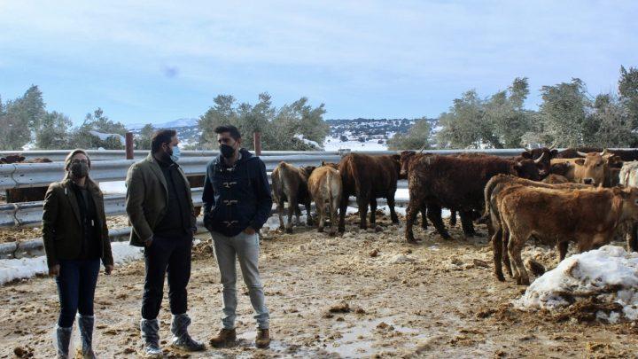 Núñez muestra su apoyo a los ganaderos de Castilla-La Mancha tras los problemas que les ha causado el temporal de nieve