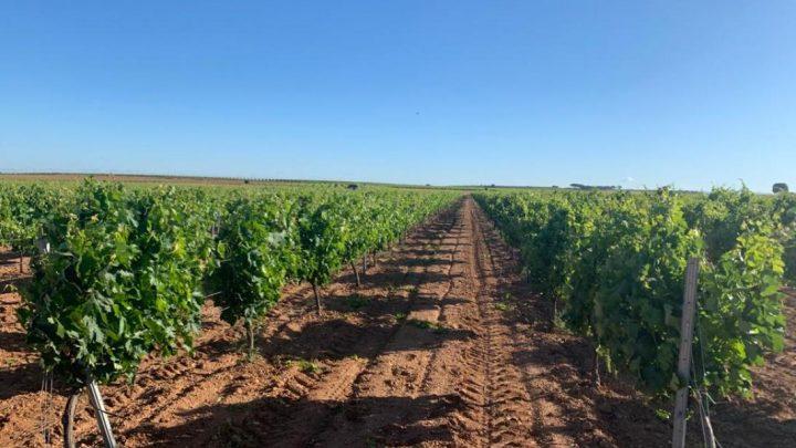 El Gobierno regional abona más de medio millón de euros de ayudas de la PAC para 456 agricultores y ganaderos de la provincia de Albacete