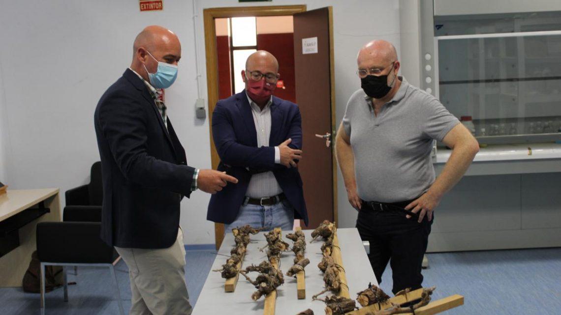 Diez proyectos de investigación de la provincia de Albacete dirigidos al sector agrario y ganadero concurren a las ayudas del Gobierno regional para grupos operativos de innovación